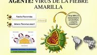 virus-de-la-fiebre-amarilla